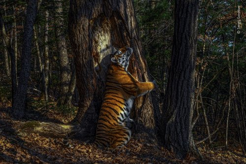 Check out the breathtaking winners of the 2020 Wildlife Photographer of the Year contest