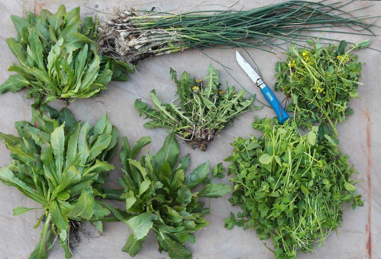 Ten weeds you can eat