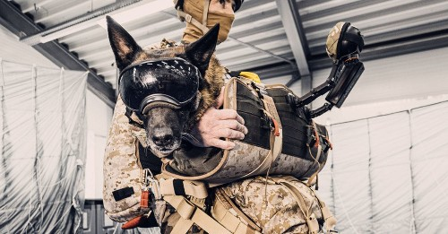 This new harness lets military dogs parachute safely and with style