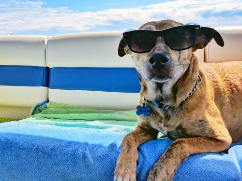 Keep your dog safe and cool during summer