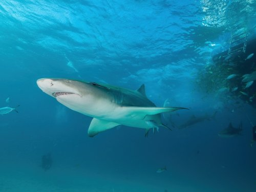 Sharks have a sixth sense for navigating the seas