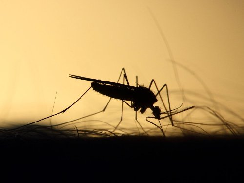 Does a cold winter mean fewer bugs in the summer?