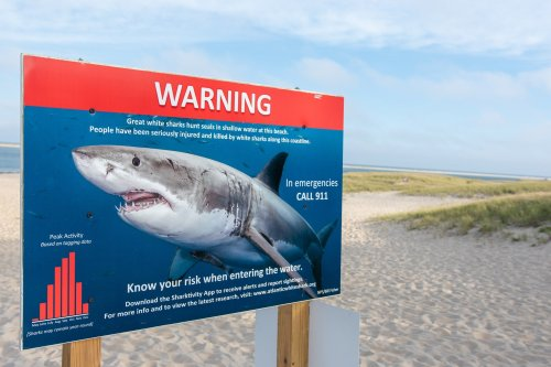 You should never have to fight off a shark—but here's how to do it (just in case)