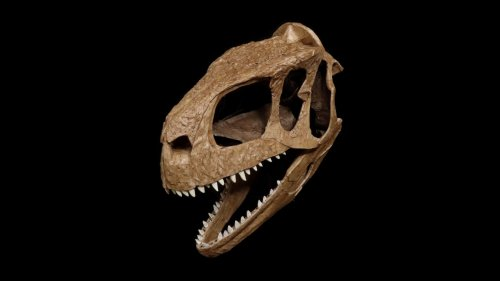 This newly discovered dinosaur is called 'the one who causes fear' for a reason