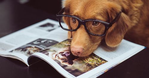 Is your dog actually smart? Here's how to test its IQ.