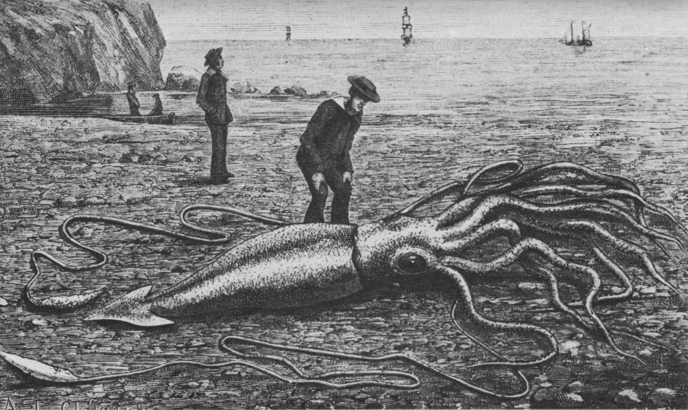 We finally have footage of a giant squid in U.S. waters