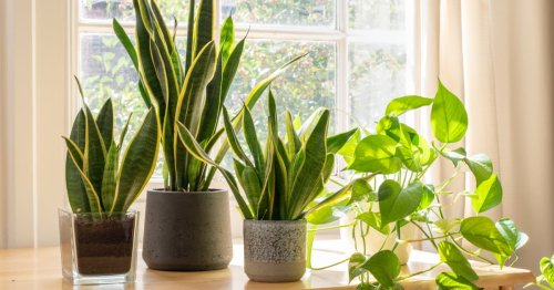 """Yes, Some Plants Do """"Scream"""" When They're Cut —You Just Can't Hear It"""