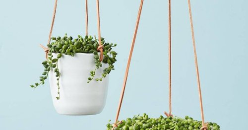12 Gorgeous Hanging Plants You'll Get Excited About