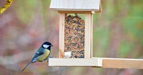 Comment fabriquer une mangeoire pour oiseaux ? 6 tutos ludiques pour débutants et bricoleurs.