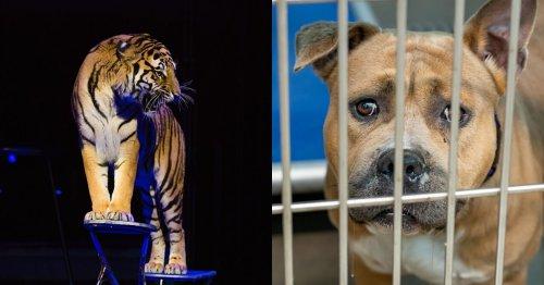 Cause animale : la vente de chiens et chats en animalerie, c'est terminé (et ce n'est pas tout)