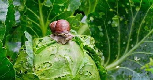 Jardinage : 5 astuces naturelles pour lutter contre les escargots et les limaces