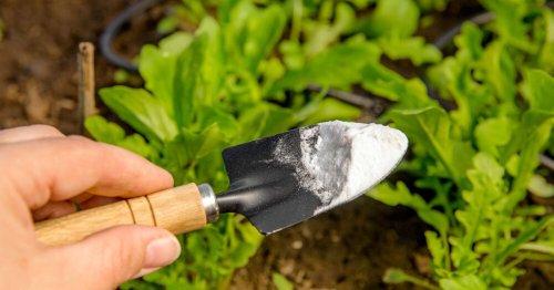 Bicarbonate de soude au jardin : 5 usages et idées pour se faciliter la vie