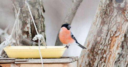Cinq abreuvoirs à oiseaux faits maison, peu coûteux et originaux à installer dans son jardin