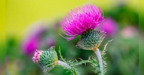 Mauvaises herbes : 8 variétés à ne surtout pas arracher de son jardin ou son potager
