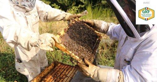Rencontre avec Barbara, ses ruches et sa GRF-Gelée Royale Française®