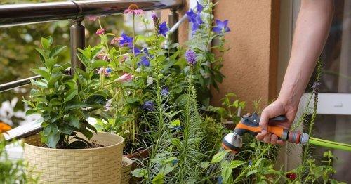 Jardinage : voici 5 conseils pour cultiver un joli potager sur son balcon