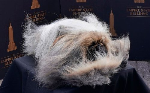 WATCH: Central Pa. Westminster dog show winner poses atop Empire State Building
