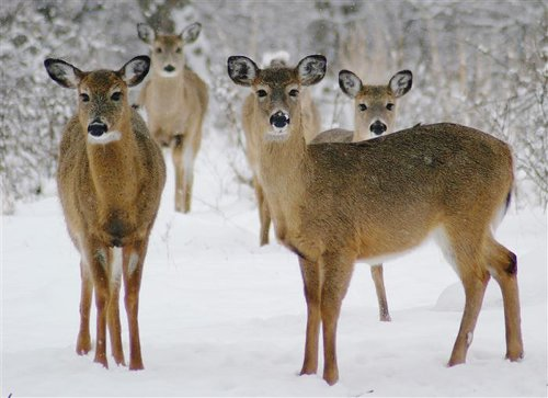 Pennsylvania's Game Commission should call the shots on Sunday hunting