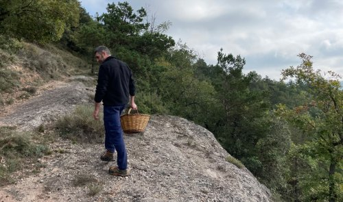 Foragers in Catalonia embrace a new mushroom-hunting season after last year's strict lockdown