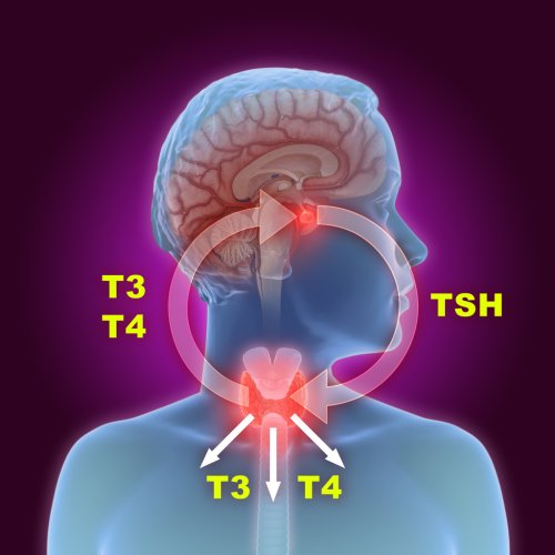 Is your Thyroid Slowing Down?