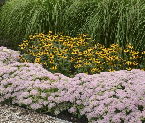10 Easy Foundation Plants for the Front of Your House   Proven Winners