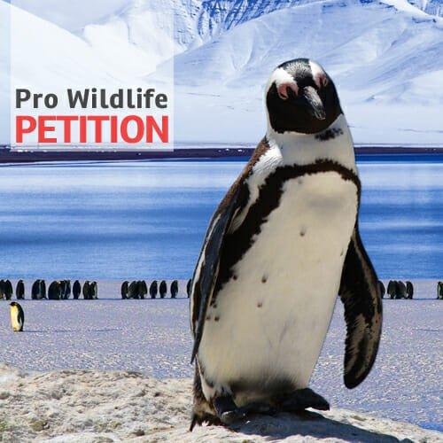 Mehr Schutzgebiete für die Antarktis - Pro Wildlife