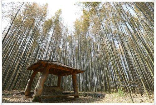 전북 가볼만한곳 익산 구룡마을 대나무숲, 달빛소리수목원, 춘포역