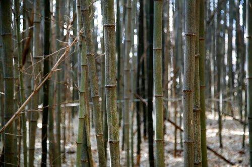 익산 가볼만한 곳~구룡마을 대나무숲~그곳에도 완전한 봄이 오려나?