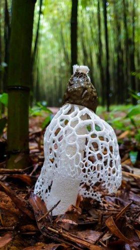 2020년 8월 2일 흰망태버섯 촬영을 위해 다녀온 익산 구룡마을 대나무숲