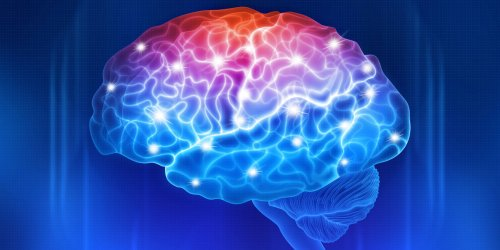 Adiposity, inflammatory activity, and poor working memory mutually amplify each other over time, study finds