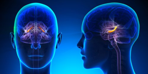Learning takes precedence over episodic memory in the hippocampus, study suggests