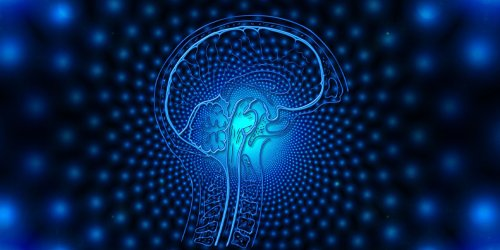 Psilocybin appears to alter how the brain integrates tactile sensory inputs