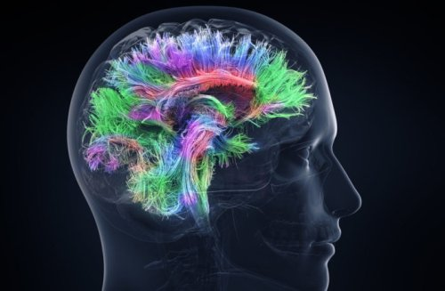 New research sheds light on how learning a new language changes your brain activity