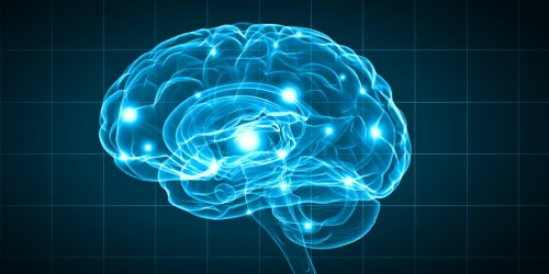 New neuroscience research suggests the cerebral cortex acts as the brain's hourglass