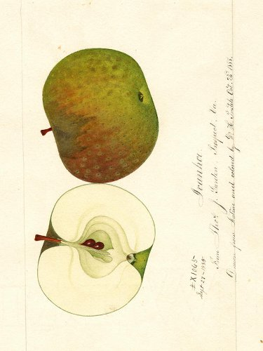 An Apple Detective Rediscovered 7 Kinds Of Apples Thought To Be Extinct