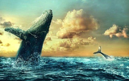 Wie der Prophet Jona: Wal verschluckt US-Fischer