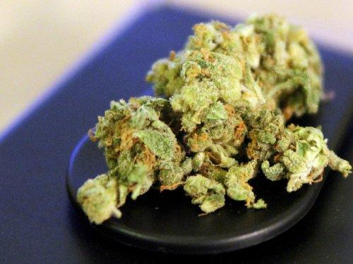 Umfrage: Mehrheit für Cannabis-Legalisierung nur als Arzneimittel
