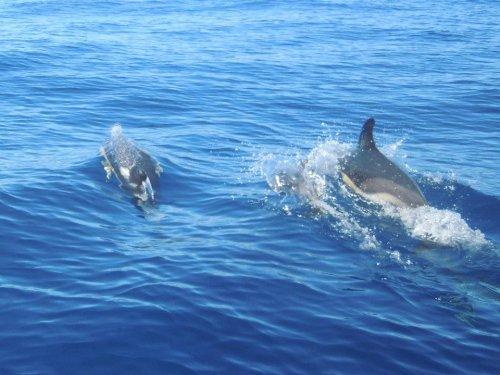 Navigando nell'Atlantico: le isole Azzorre | Puntine sul mondo