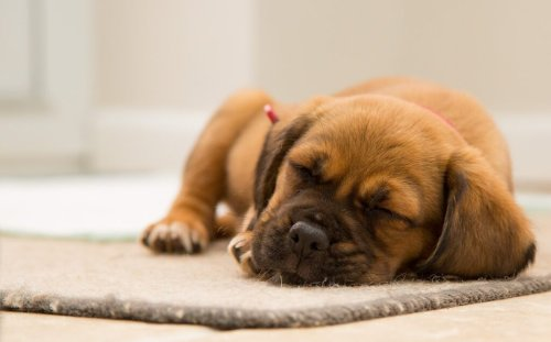 How to Get a Puppy to Sleep Through the Night: Tips and Tricks
