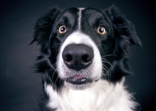 How Long Do Border Collies Live? Tips on Helping Your Dog Live a Healthy Life