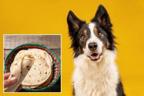Can Dogs Eat Tortillas? Corn vs. Flour Tortillas for Dogs