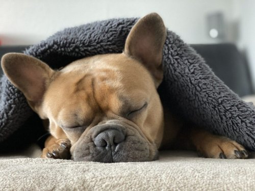 Dog Anxiety Symptoms and How to Treat Them