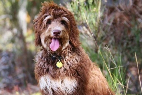 11 of the World's Cutest Dog Breeds