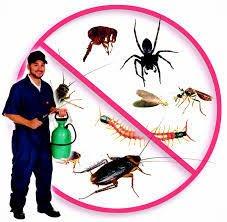 شركة مكافحة حشرات بصبيا-0536289213 رش مبيدات النمل الابيض بصامطة - القمر السعودي للتنظيف والمكافحة بخميس مشيط وابها