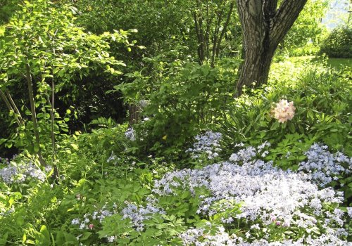 Bulbs and perennials to plant under trees