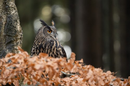 Rare and giant owl spotted for the first time in 150 years: 'Huge surprise'