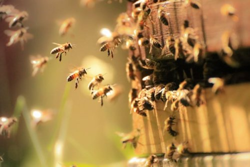 Tanger Factory Outlet center in Fort Worth installs beehives on roof