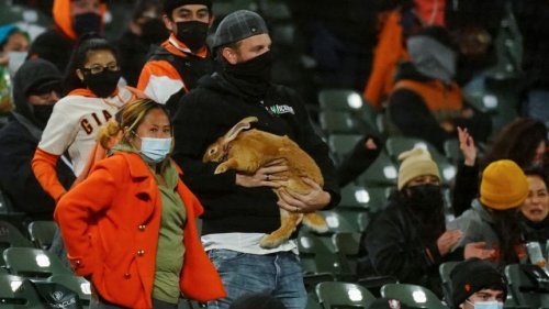 There was a therapy bunny at the Giants game and the backstory is incredible