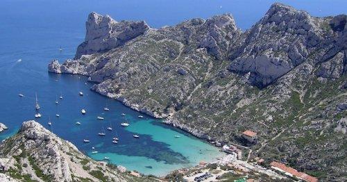 Méditerranée : Une algue brune envahit les calanques