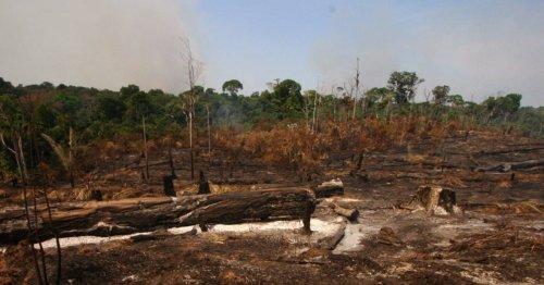 Brésil : la Cour suprême décidera-t-elle de l'expulsion des Amérindiens ?